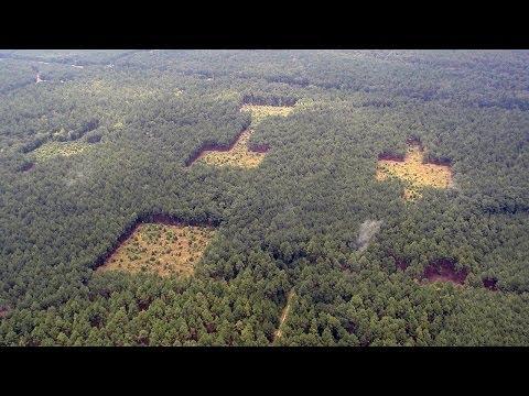 Science Bulletins: Habitat Corridors Benefit Isolated Plants