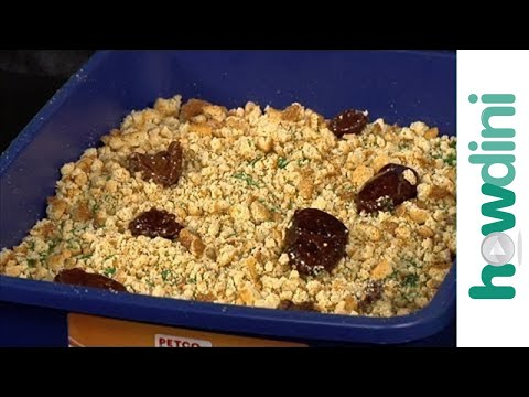 Halloween cake decorating: How to make a kitty litter cake recipe