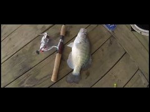 Crappie Fishing On Docks