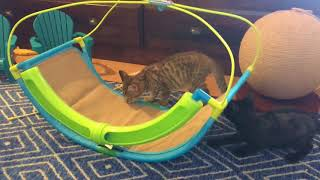 Foster Kittens Get a New Toy!