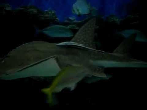 Philippine Fish Tank! Manila