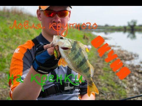 рыбалка ранней весною  получай спиннинг видео окунь