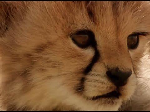 Wild Cat Family Pictures