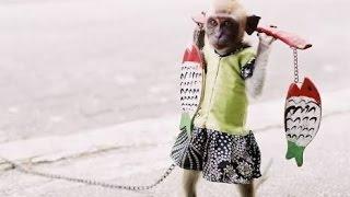 Atraksi Topeng monyet Lucu Dari Naik Motor Sampai Meniru Gerakan Sholat | Funny Monkey HD