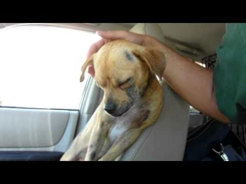 Dougie - rescued after being dumped on the streets (By Eldad Hagar)