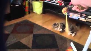 Sneaky on catnip