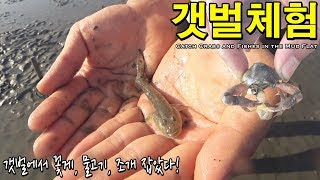 처음으로 갯벌체험 해보았다! 꽃게랑 물고기, 조개 잡았다! - 허팝 (Catch Crabs and Fishes in the Mud Flat)