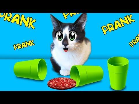 СМЕШНЫЕ ПРИКОЛЫ над КОТАМИ 2! Смешные кот МАЛЫШ и КОШКА МУРКА! 4 Смешных ПРИКОЛА над  котятами