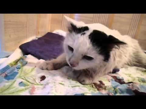 Дети Павлодара скинули кота с 10-го этажа