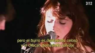 Watch Florence  The Machine Donkey Kosh video