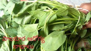 పాలకూర ఆరోగ్య లాభాలు#Spinach Health Benefits#Health Benefits of Eating Spinach#Palakura Benefits&Use