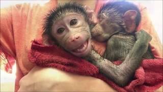 Michelle's adventure about monkey's, love and happiness III