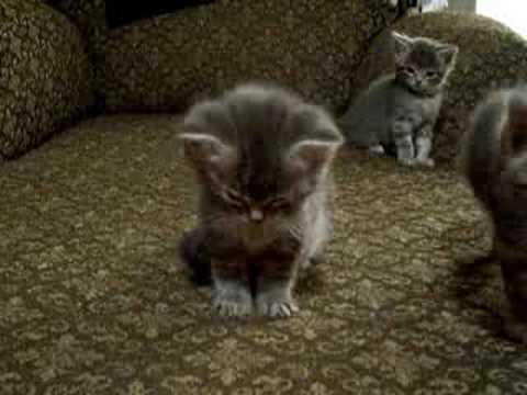 Little Kitten So Tired. Cutest vid ever!!!
