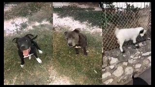 Oiseau Tyson: Bibi fait le cross, elle devient un chien 😂😂