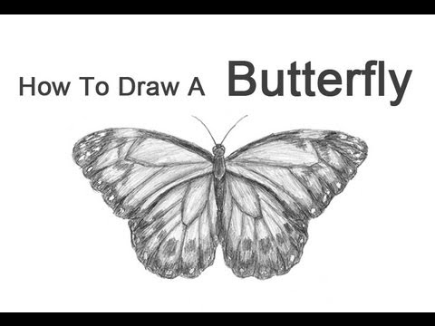 how to draw a butterfly youtube