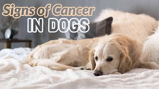 ???? Signs of cancer in dogs - mast cell tumors in dogs - dog cancer treatment ????