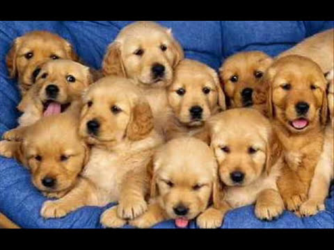 10 PERRITOS  INFANTIL -Children 10 puppies