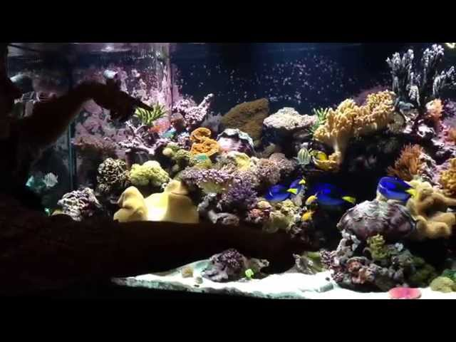 Fishes And Corals In the 700 Gallon Reef Tank Exhibit At The Ocean Explorium
