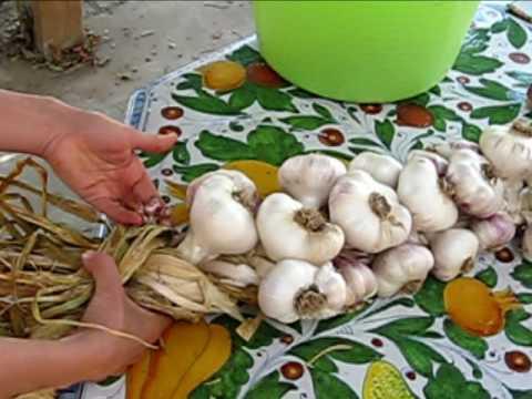 garlic braiding youtube