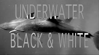 Underwater in Black & White | Scuba Diving | NYUPS