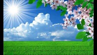 【作業用BGM】 春の日向けBGM ~春の誘い~ - Spring Soft - 【Pops/Light Bossa】