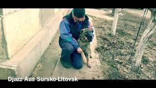 GSD Djazz Aus Sursko-Litovsk
