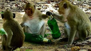 Sweet Pea and Danna might be drank if do like this, don't do this monkey Sweet Pea