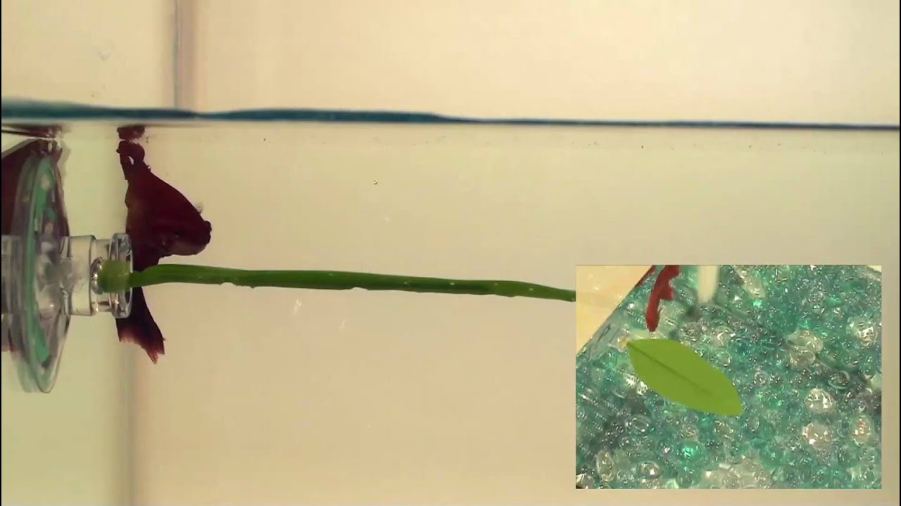 betta bed leaf hammock youtube