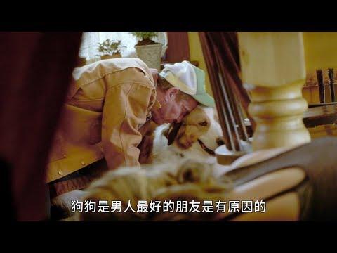 【狗狗的旅程】精彩花絮 : 快樂狗狗篇