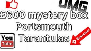 £600 mystery box!! portsmouth tarantulas