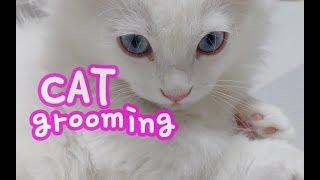 고양이 그루밍 힐링영상(no talking) Cat Grooming Healing Video グルーミング猫