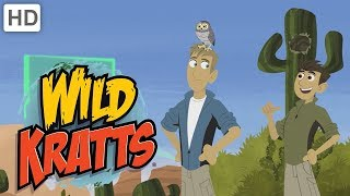 Wild Kratts - Explore the Desert!
