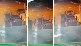 Big Cat Spotted On CCTV In Birmingham