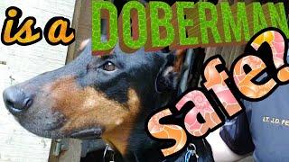 Is a Doberman Pinscher a Good Safe Family Dog?