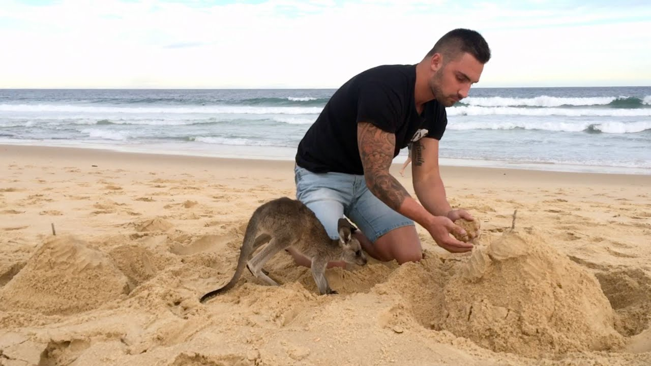 [This Australian Dude's Best Friend Is A Baby Kangaroo] Video