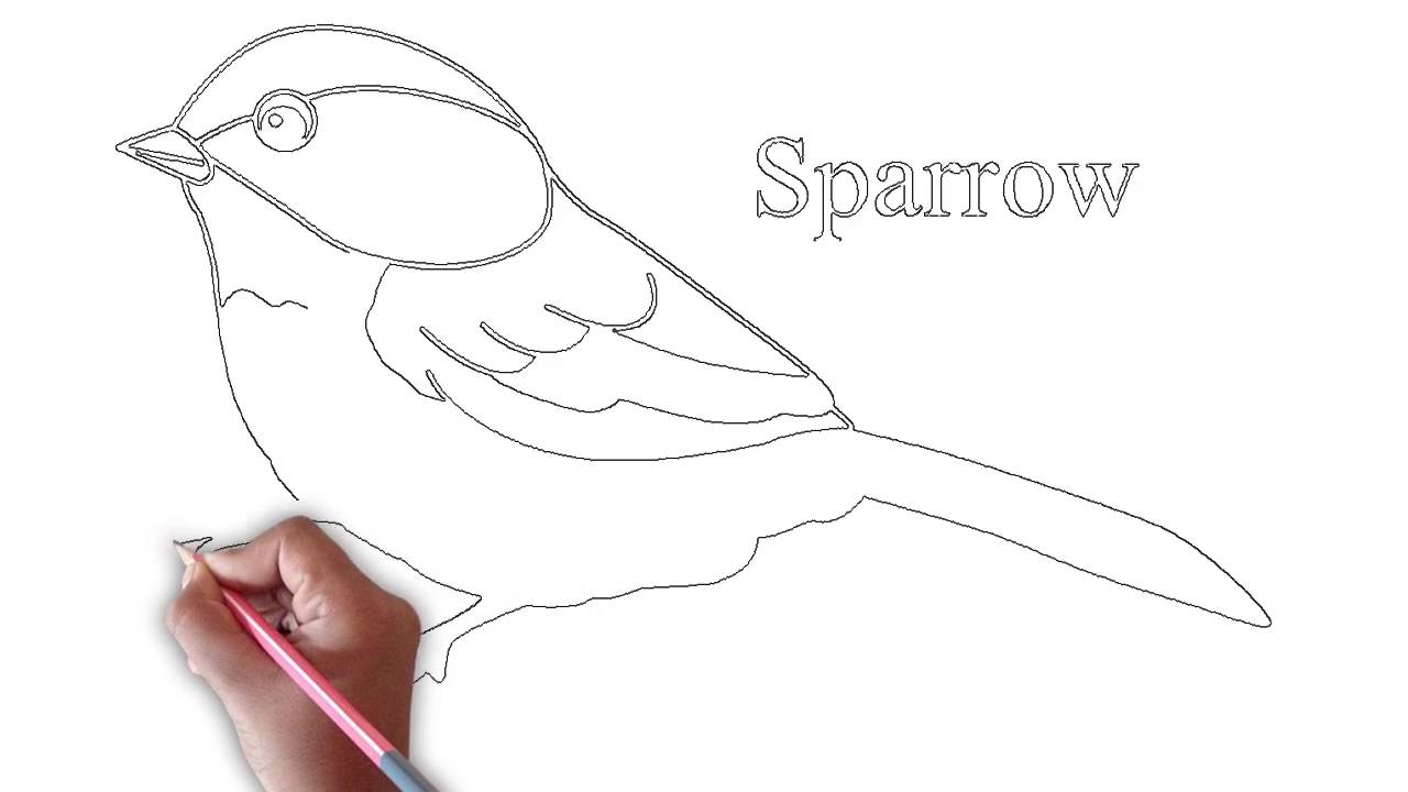Simple sparrow drawing