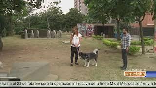 Ciudad del Río, espacio para compartir con las mascotas en Medellín [Noticias] - Telemedellín