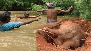 One of the greatest baby elephant rescue operations: Deep in the wild