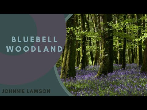 8 Hour Nature Sound Relaxation-Soothing Forest Birds Singing-Relaxing Sleep Sounds-Without Music Music Videos