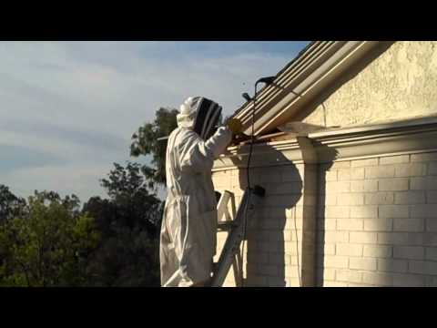 Removing a bee hive from a structural void.mp4