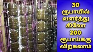 Kalaan Valarpu Tholil-Mushroom Cultivation Business in Tamil-Low investment Business