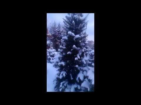 "Питомник ""Природа"" зимой"