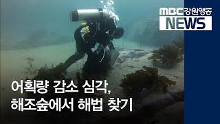 투R)어획량 감소, 바다 해조숲으로 돌파