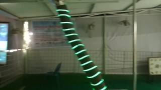 BKC Pre-Dog Show Seminar Shajal's Dog Play Ground by Dr. Sagir's Pet Clinic 01912251312