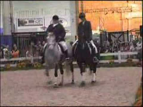 Bitless Dressage Nurtural Pas De Deux-revised