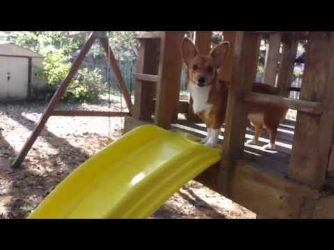 Mika goes down the slide