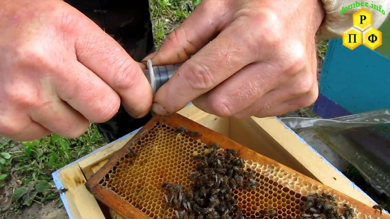 Как сделать отводок пчел Пасека. Пчелы. Мёд 41