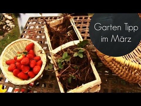 Garten Für Den Frühling Fit Machen (Erdbeeren Im März Pflanzen)  | Garten-Tipps