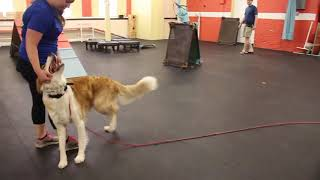 Dog Training Recall with Hank | Obedience Dog Training Drills