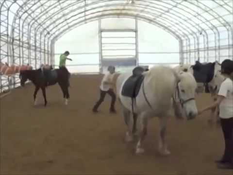 Лошадиная самозащита!  Bad horse